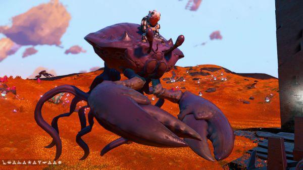 無人深空-部分怪異外觀寵物坐標 25