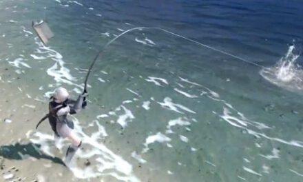 尼爾偽裝者-魚類位置分享與所需魚餌表
